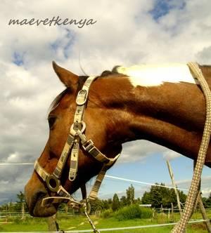 Bonjour et bienvenue sur mon blog: maevetkenya