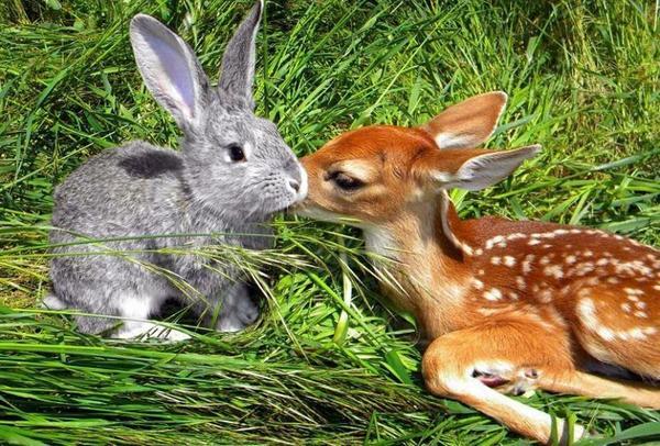complicité animal    ....
