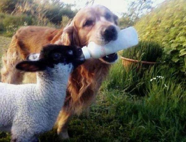 les animaux .... et des leçons de vie ....