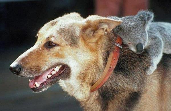pour faire de beau  reve  , un peu de complicité animal  ...
