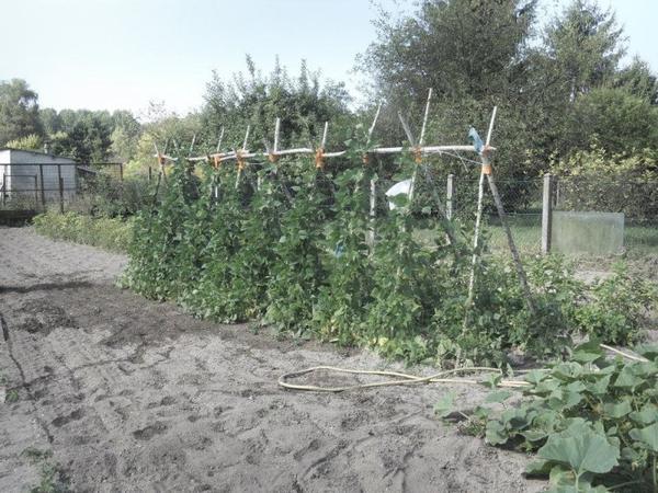 photo jardin et recolte