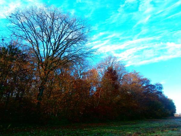 paysage de nature  ...