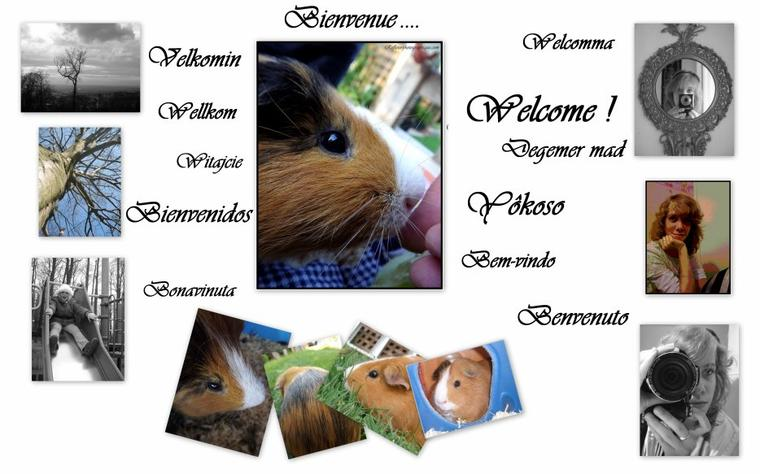 Bienvenus a tous !!!