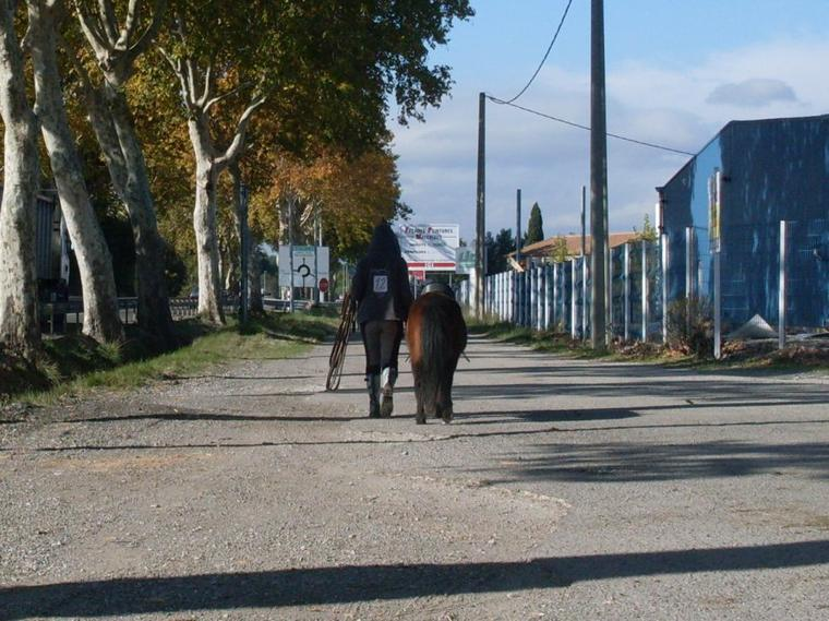 #4. Nos chevaux, Nos histoires...