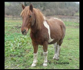 Très loin, au plus profond du secret de notre âme, un cheval caracole... Un cheval, le cheval ! Symbole de force déferlante, de la puissance, du mouvement, de l'action.