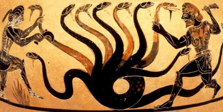 Hydre femelle = Hydra