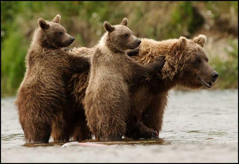 Petite ourse = Ursa Minor
