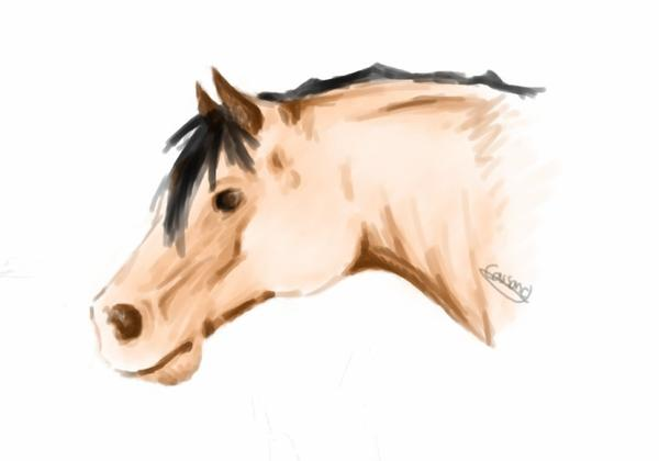 dessin cheval pur sang