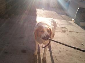 Ce chien je l'aime, il est tellement adorable <3  (Caroline)