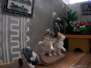 Nouveaux chatons au club!!!!!