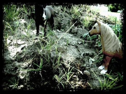 Un poney si courageux... partie 2