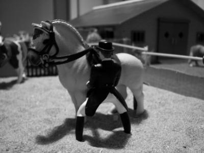Nouveau poney...