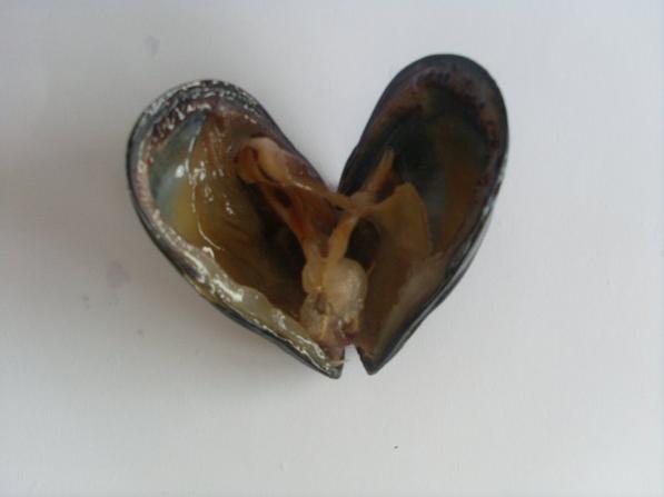 Etude sur La pollution métalliques de littoral jijelien
