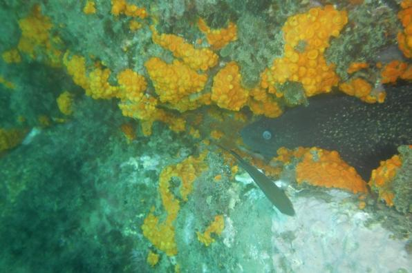 Photos de la future Aire Marine Protégée de TAZA
