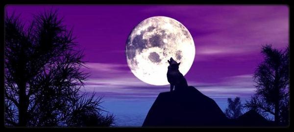 « Il faut hurler avec les loups, si l'on veut courir avec eux.  »  - Secret Lupin.