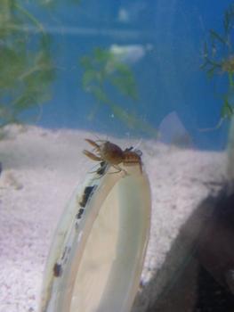 Yass-crevettes 5