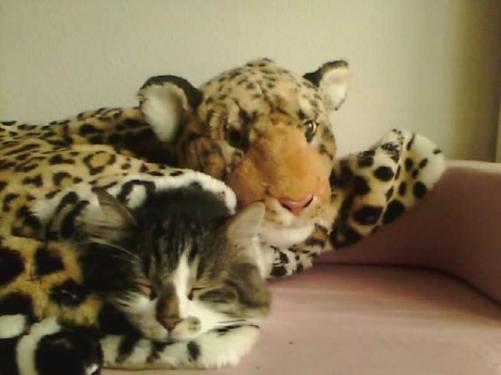 Le Dimanche pour un chat ...