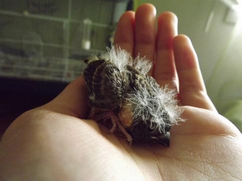 Deux Petits au nid !