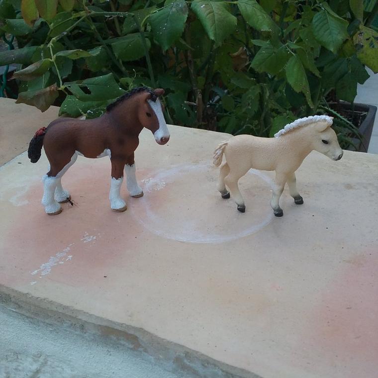 Des nouveaux poulains au Haras du Cheval d'Or