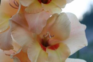 Mes Fleurs.