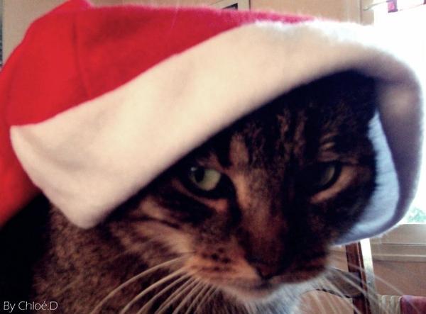 le sapin de Noel ♥