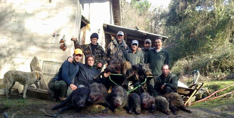 Samedi 7 et dimanche 8 Janvier 2012 : Un week-end extraordinaire ! 12 sangliers !