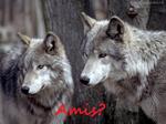 Bienvene dans la tanière du loup ♥