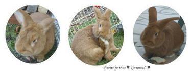 Bienvenue, découvrez mes amours de lapins!