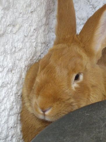 Mon lapin, mon confident
