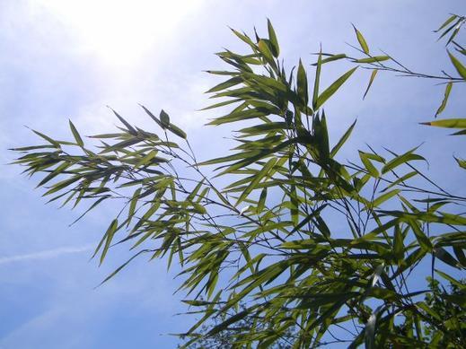 Du ciel dans les bambous... Ah non c'est l'inverse! Enfin je crois...