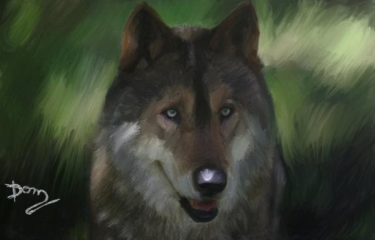 Le loup !!!!   Peinture réalisé pour mes amies  Sophie-loup et  MONALBUMDELOUPS !!!