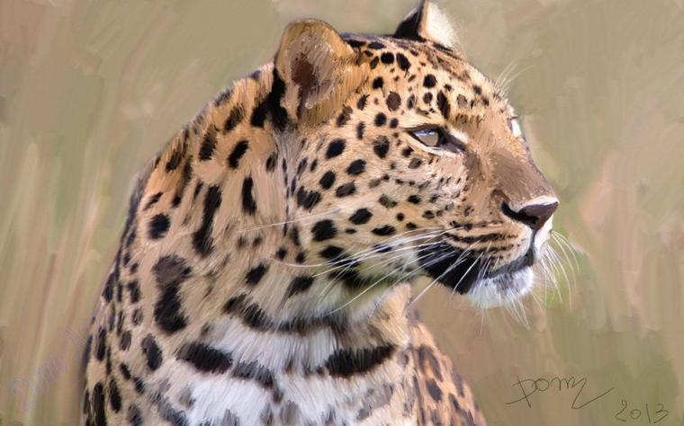 Un magnifique  léopard  ....