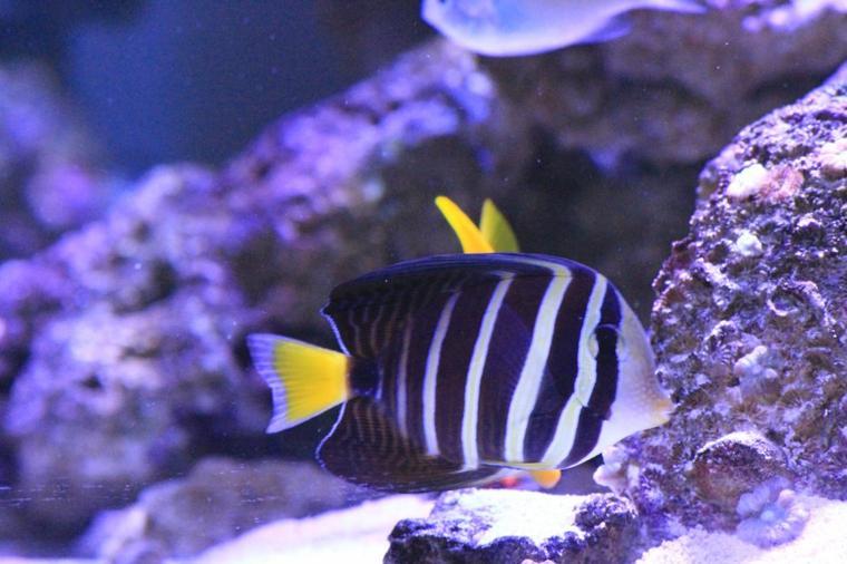 Mon aquarium marin !!