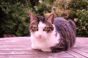 La chatte du voisin, elle est trop chou !!