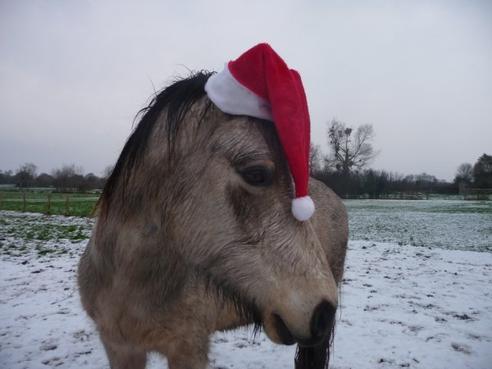Joyeux noël à tous!!!
