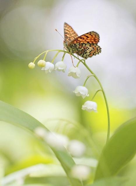 Petit brin de muguet et de beaux jours ensoleillés. Profitez de ce bonheur qui vient à votre rencontre.