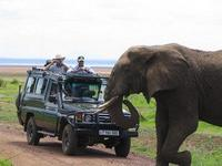Budget Tanzania Safari Introduction