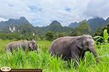 What We Typically Misunderstand About Elephant Phuket