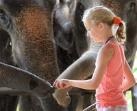 Elephant Camp Thailand - What Every Person Must Look Into