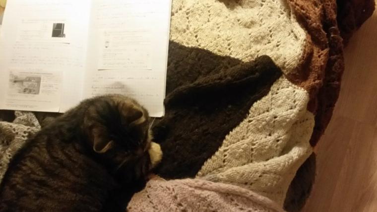 mon chat qui à apprend la physique