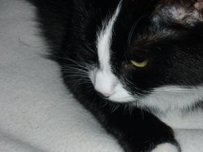 On ne choisit jamais un chat : c'est lui qui vous choisit.