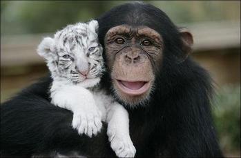 Les amitiés inter-espèces et le spécisme des humains
