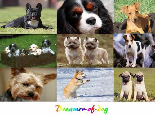 Sommaire des races de petits chiens