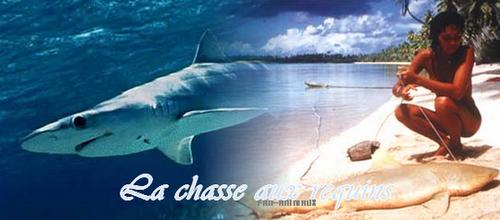 Cause n°7 : La chasse aux requins