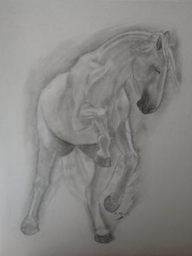 Le cheval, le cheval...