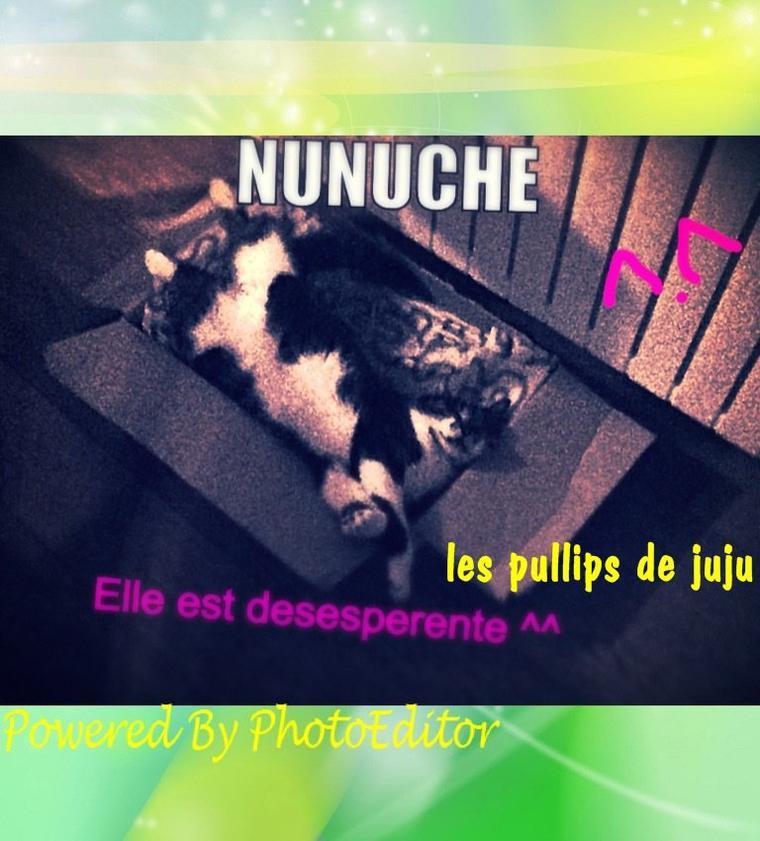mon chat >.<