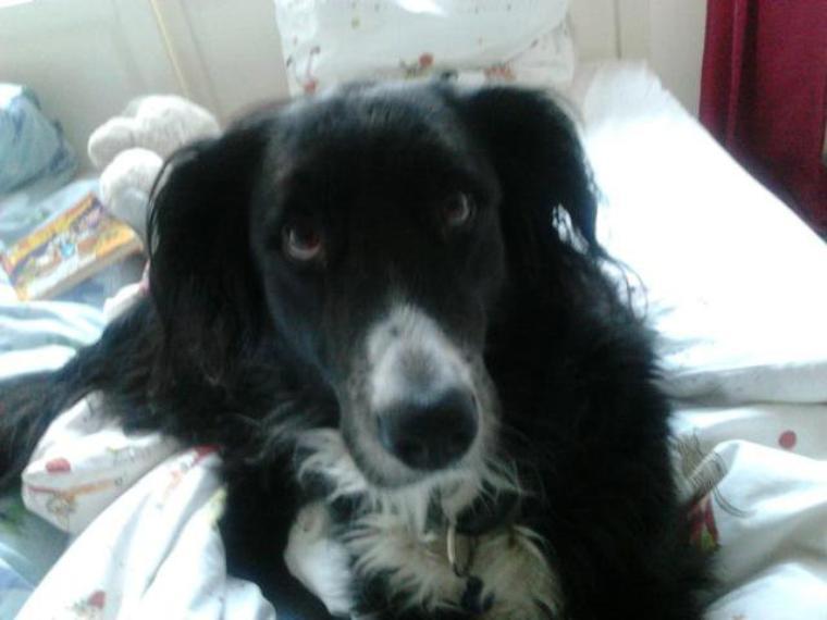 Mon chien qui louche ! Mdrr :')