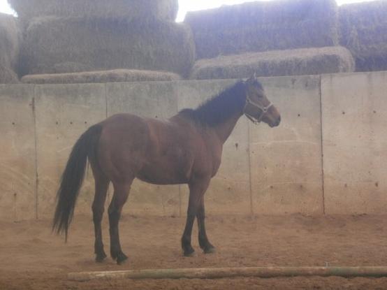Mon amour de poney !!! ♥