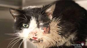 Un chat sort de sa tombe, 5 jours après sa « mort »