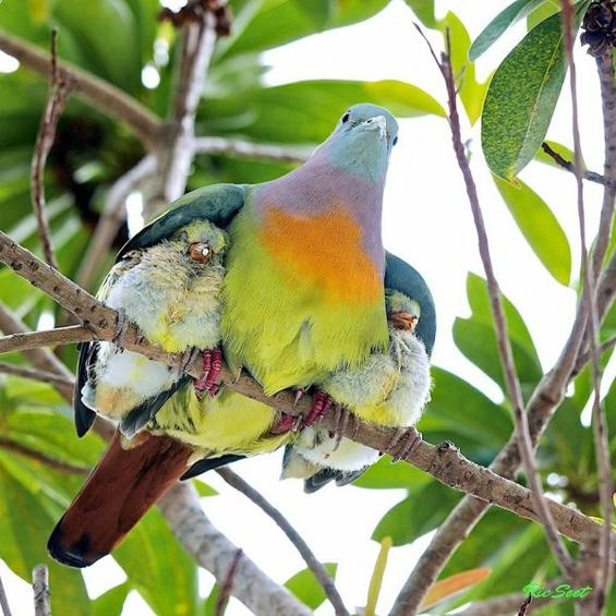 Parental Love!